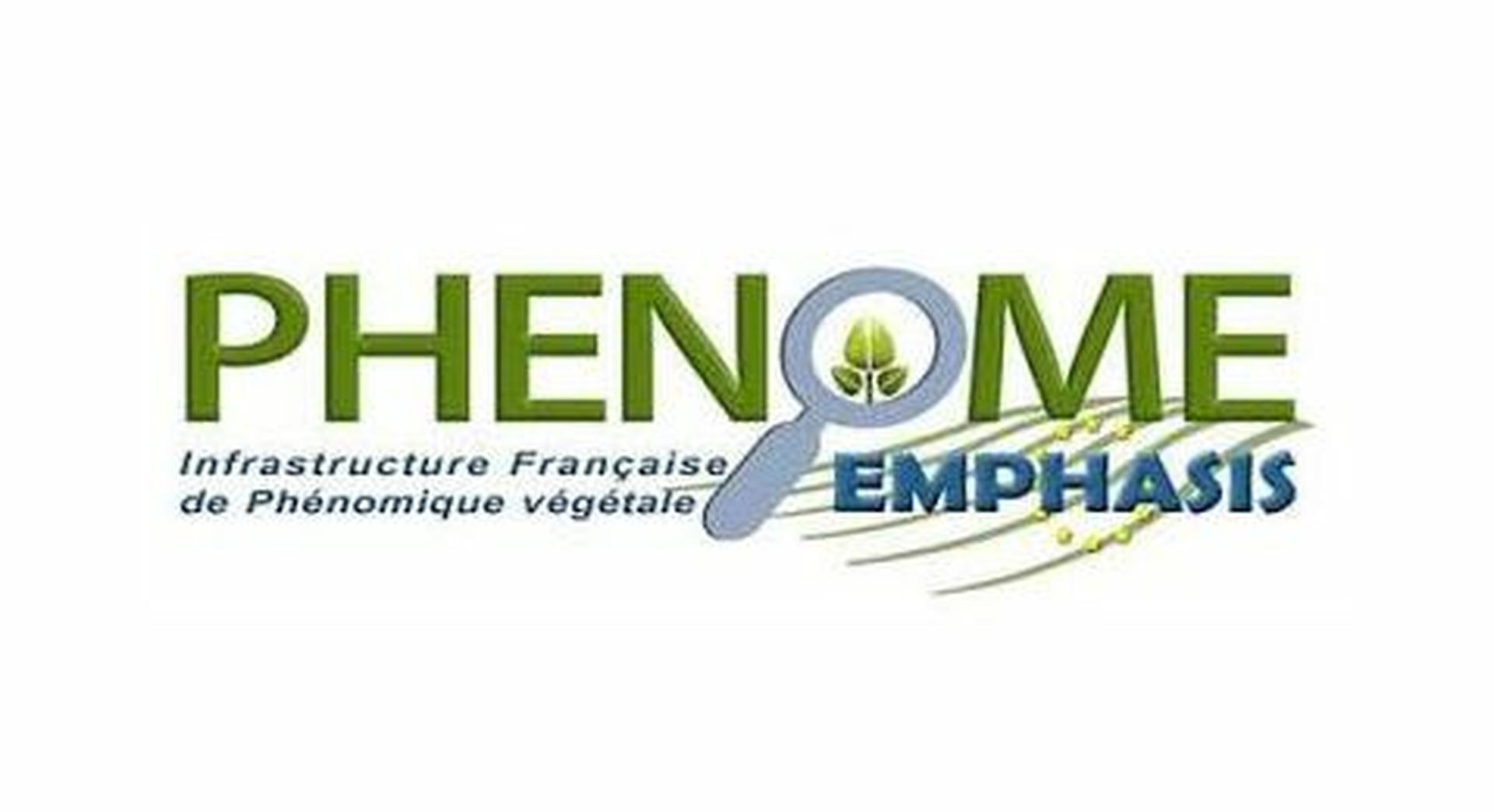 Phenome EMPHASIS