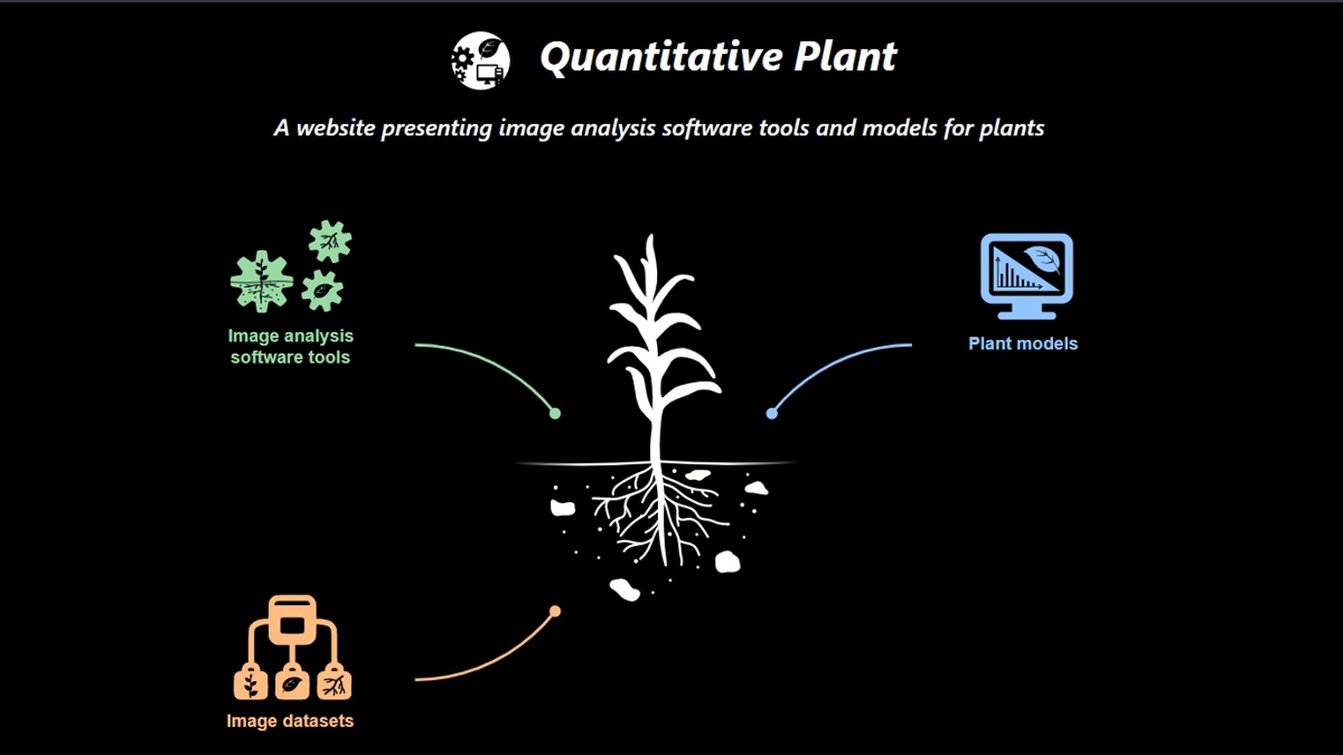 Quantitative Plant